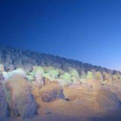 「現金特価」【蔵王の神秘アイスモンスター】樹氷ライトアップ鑑賞プラン(ロープウェイチケット付き)