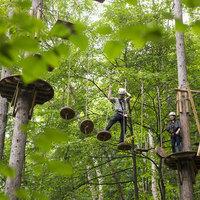 112:【森で遊ぶ】森の中のアスレチック☆大自然上級コース体験★最大2000円キャッシュバック!