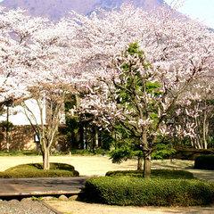 【季節限定】春爛漫◎桜を愛でた後は 春ならではのお料理に舌鼓♪