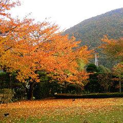 【秋期限定】絶景 うつくしま紅葉プラン(うれしい特典付♪)