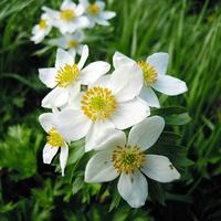 夏のお花畑♪風景に癒される!高山植物を見ながら立山室堂周辺をトレッキング