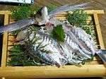 ★地元アワビ★イキイキ活魚プラン【贅沢海の幸】「現金特価」