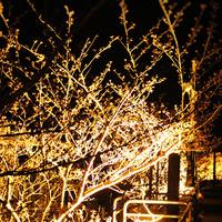 【4/6、13金曜限定】夜桜クルーズ貸切!SAKURAナイトクルーズプラン★お花見ディナーは船上で♪