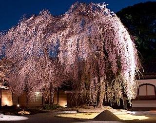 ★高台寺★桜ライトアップ 春の夜間特別拝観券付1泊2食付プラン
