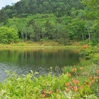 【山菜御膳】志賀高原で季節の恵みを味わうプラン♪一泊二食付き【季節限定】