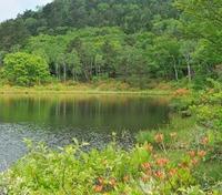 \スタンダードプラン/◆グリーンシーズンも志賀高原を満喫◆信州の味をたっぷり
