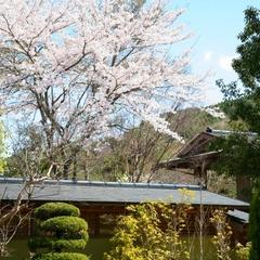 【春旅応援】当館のお庭は4月中旬が桜の見頃です☆5つの特典付きプラン