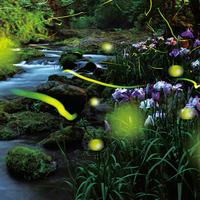 6月16日〜7月10日♪当館のお庭がホタル観賞の名所です☆4つの特典付きプラン