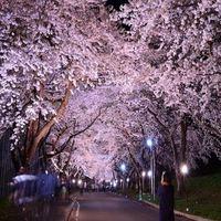 ◆お花見プラン◆春の函館を満喫♪お一人様生ビール1杯サービス!【彩の膳】をお部屋食にて…