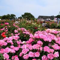 一度は訪れたい人気の花公園!【国営ひたち海浜公園】観光プラン!うれしい特典付き♪