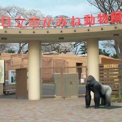 日立においでよ!【かみね動物園】特典付き優待プラン!カップルやファミリーにオススメ!