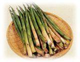 山菜採りプラン(案内・お土産付、期間限定・部屋数限定)