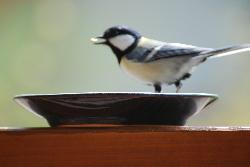 B&B朝食付きプラン 山小屋風の部屋でのんびりと☆