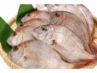 鯛シャブと鯛の梅つみれ鍋に常陸牛石焼きプラン (現金特価)