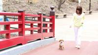 ☆ワンOne旅行☆愛犬と一緒に郷土料理1人旅【平日限定】