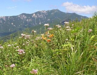 山歩き シンプル素泊まりプラン
