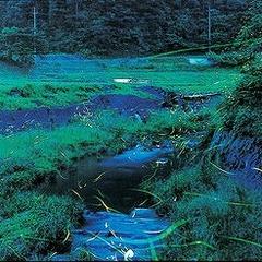 【6月限定】幻想的な光がおりなす初夏の風物詩 清流日本一の高津川流域に舞うホタルを見よう(^o^)