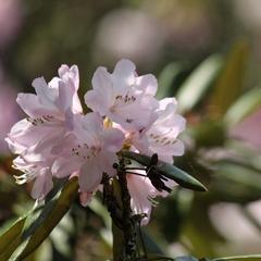 【春グルメ】定番の人気味覚♪しまね和牛すき焼きと彩りバツグンでボリューム満点(^^)v の花かご会席