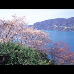 【期間限定】春爛漫!桜舞い踊る♪ 神子の山桜を見に行こう!☆天然神子フグフルコース