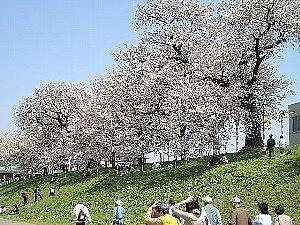 春爛漫お花見特別プラン