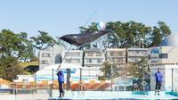 【松島水族館チケット付】イルカにペンギン♪海の生き物に会いに行こう