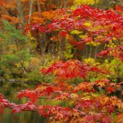 【紅葉観光企画】うつくしま秋めぐり観光プラン【朝食付】〜福島の美しい秋をお楽しみください〜