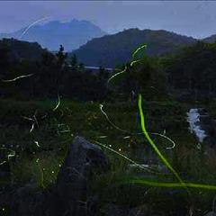 【1日20名まで!】ホタルの幻想的な光を楽しむ♪初夏の蒜山高原満喫プラン