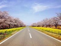 【お日にち限定】春のチャンスDay! 1日3組限定、この日だけお得に宿泊♪