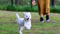 【春夏旅セール】ワンちゃん洋室〜愛犬と温泉旅行満喫プラン♪
