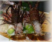 地魚磯盛&伊勢海老付!新鮮な活魚料理満載プラン