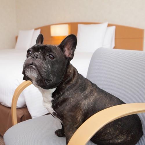 愛犬も一緒にご宿泊!自然満喫でわんちゃんも大喜び・ドッグフレンドリープラン<朝食付>