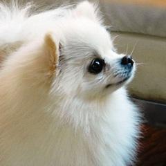 【1泊2食付】ペットと過ごせる安曇野ライフ♪愛犬とご一緒にご宿泊いただけます!