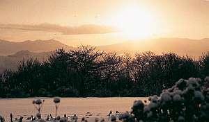 【冬得】令和最初の国営アルプスあづみの公園のイルミネーションを堪能できる、入場料付きプランです。