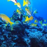 ≪マリンスポーツプラン≫ 〜壱岐の美しい海で思いっきり楽しむ!〜