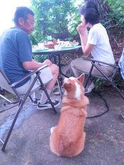 現金特価★朝食付・素泊り等愛犬と共に白馬の旅【同室可】1日3組迄★のんびり愛犬と休日へ触れ合う一時を