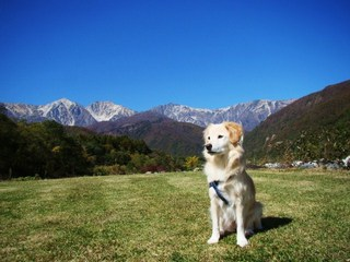 現金特価★素泊り▲愛犬と共に白馬の旅【同室可】1日3組迄★のんびり愛犬と春の休日へ触れ合う一時を