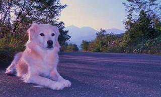 現金特価★▲愛犬と共に白馬の旅【同室可】1日3組迄★のんびり愛犬と休日へ触れ合う一時を・・・。▲