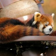 【楽天限定】間近で見よう☆旭山動物園入園券付プラン《素泊り》