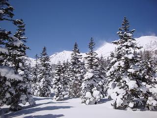 アルプス展望洋室で、ペットと素泊まりと、お得な白馬岩岳スノーフィールド・リフト1日券付きプラン