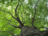 新緑のブナ林を歩くプラン =群馬県在住の方は5.000円のキャッシュバック=
