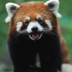 今日はジャングルへ行こう♪ 笑顔と癒しの宝庫!多摩動物園プラン【朝食付】