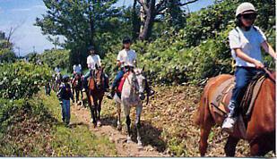 ●【乗馬トレッキング1.0・オプション】大山の麓をお馬でお散歩とフランス料理の宴〔現金特価〕