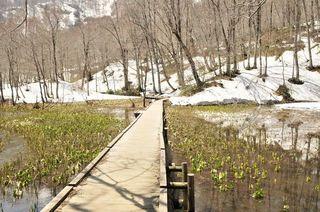 【素泊まり】白馬山麓 神秘の八方池 標高2060mは驚きと感動 八方尾根は高山植物の宝庫です。