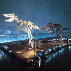 【恐竜王国ふくい】恐竜博物館&ディノパークのWチケット付き楽プラン【政竜くんもいるよ!】