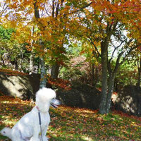 【秋冬旅セール】2食付☆ペットと一緒に泊まろう!信州の味覚満喫ペットプラン│事前に質問への回答が必須