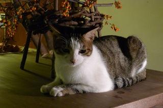 【お先でスノ。】[現金特価]和室でのんびりウインタープラン素泊まり (小型犬猫可)