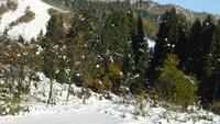 【1泊2食付】スキー&スノボ!冬を楽しむ!ムイカスノーリゾートリフト1日券付プラン