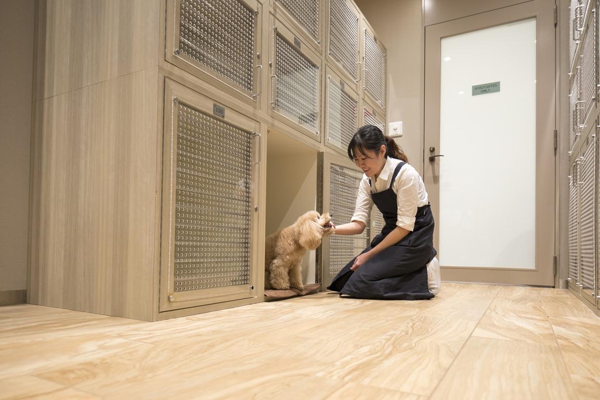 【わんちゃんとリゾートステイ♪】朝食&愛犬お預かりサービス付きプラン