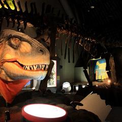 【恐竜博物館・一般入場チケット付】現地で買うより少しお得!定番の二食付きと「とろつや」の湯を満喫♪