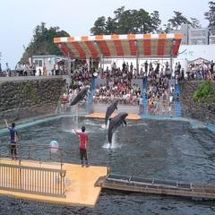 【海の生物に癒される〜!】夏の家族旅行に最適♪越前松島水族館チケット付プラン★